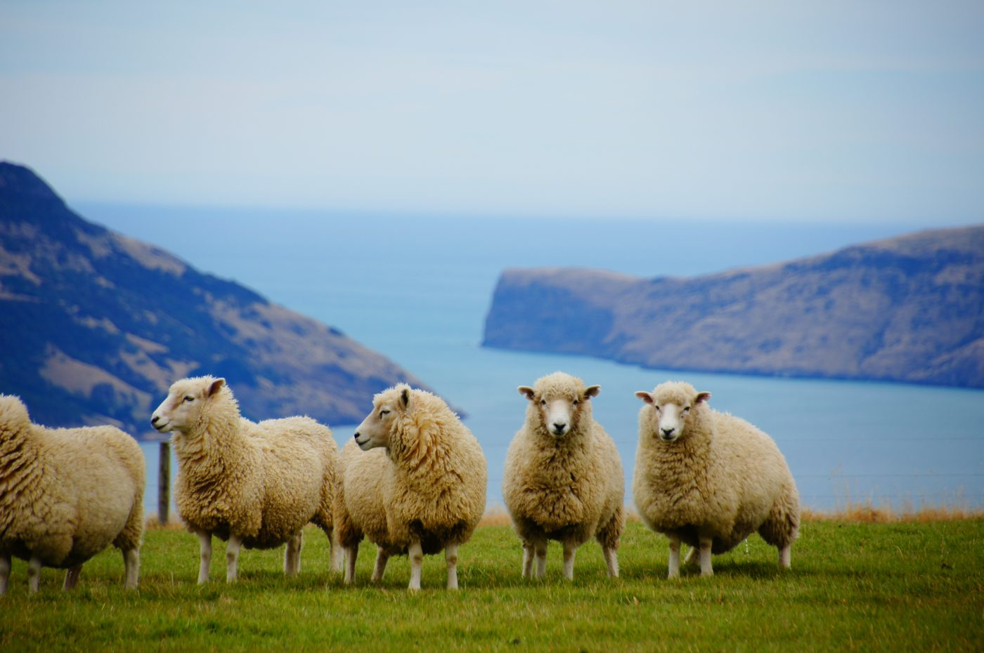 All The World Wants To Travel To New Zealand