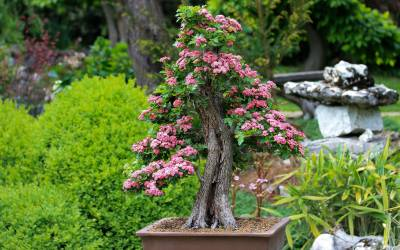 Bonsai – The Journey East To West