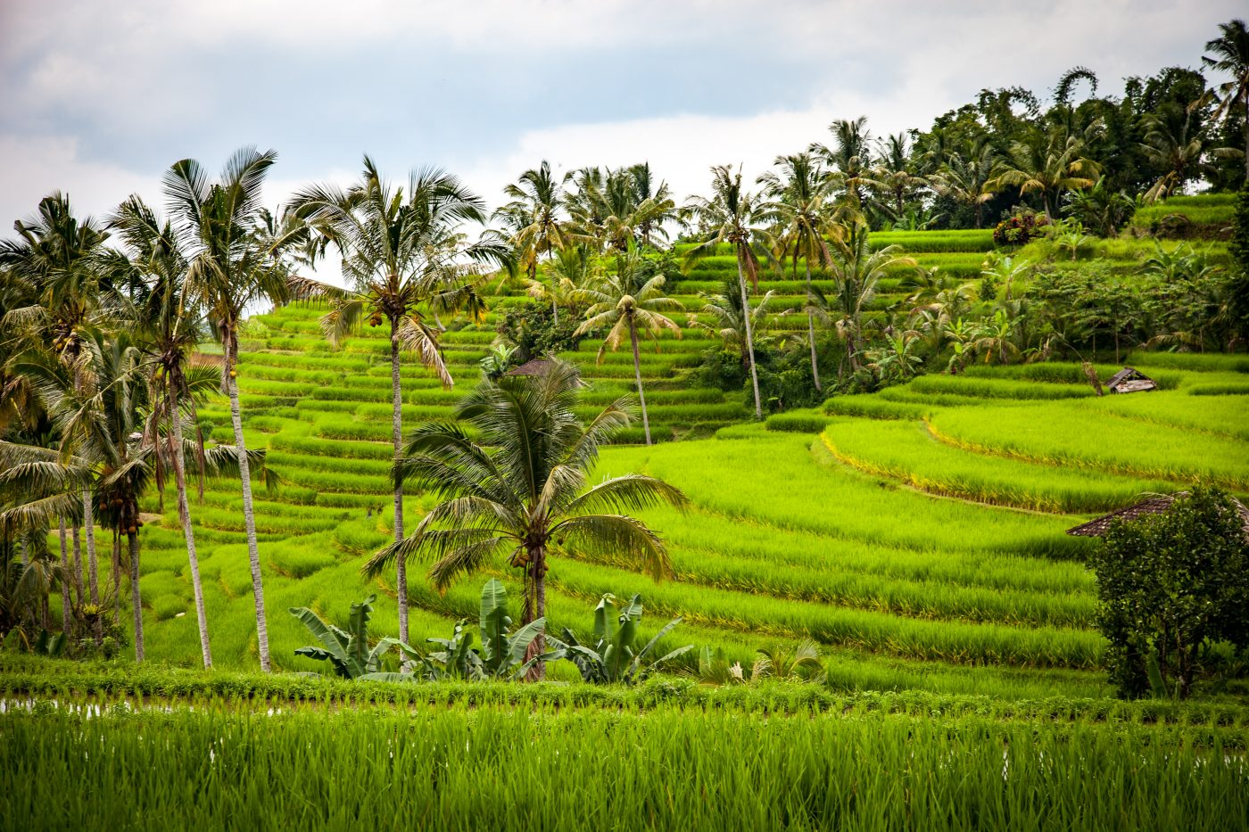 Bali Vacation Discover A Breathtaking Panorama Of Jatiluwih