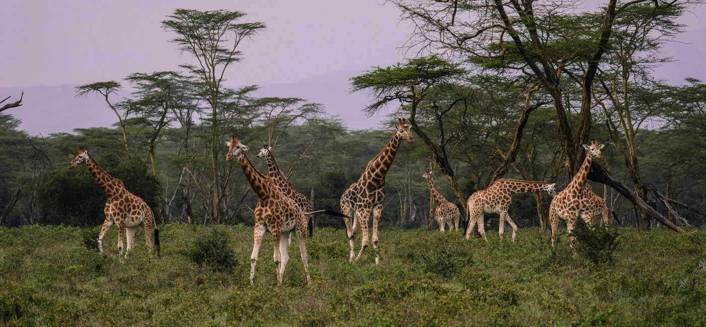 African Safaris – What Kind Are There