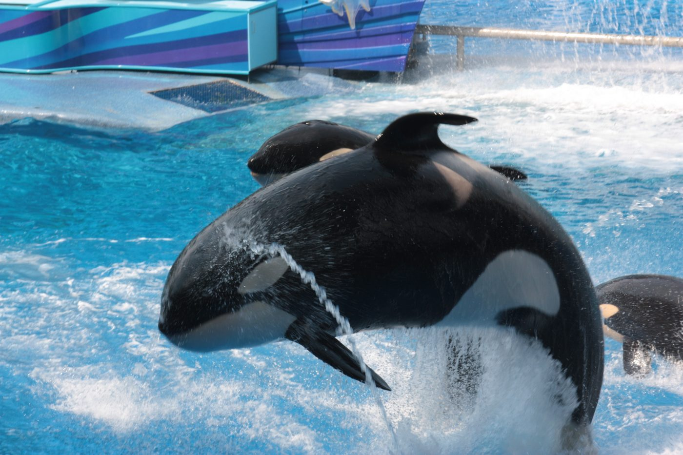 Free Ticket - Seaworld Orlando