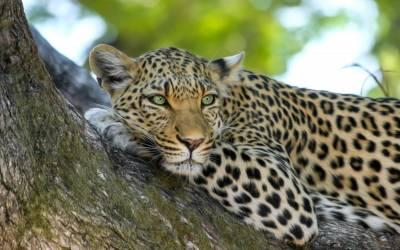 Botswana Emerges as an Up Market Safari Destination