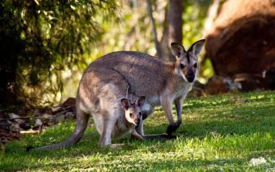 Kangaroo Island – An Australian Island Paradise