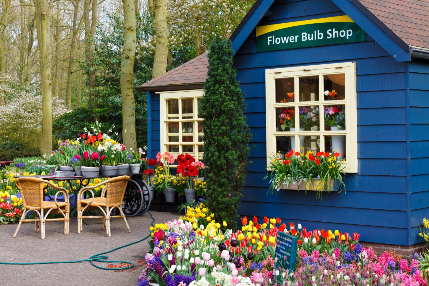 Holland: Exploring the Tulips, Windmills & Wooden Shoes